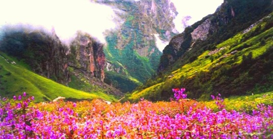 valley-of-flowers-1