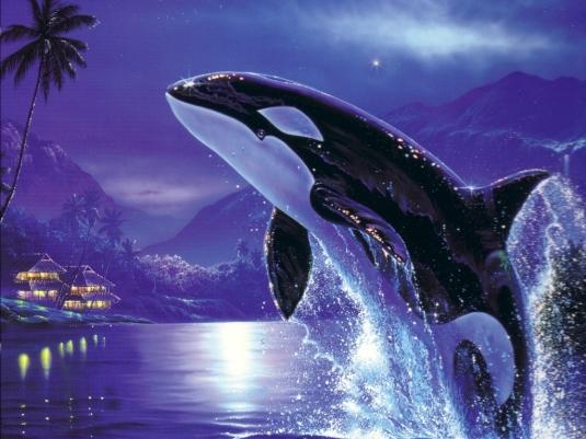 52589537-orca-wallpaper.jpg